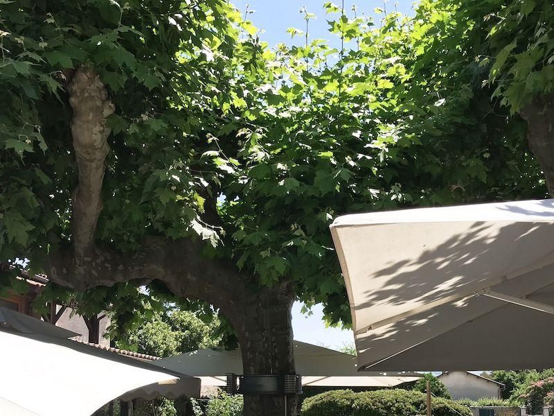 arbre de la terrasse ombragée restaurant tante yvonne Lyon - Villefranche sur Saône